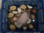 turkey in the brine